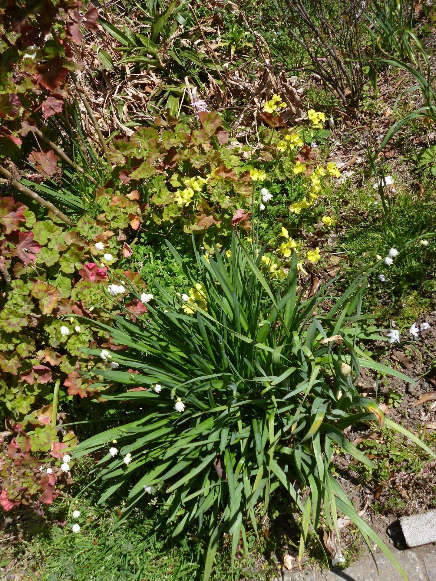 鈴蘭と菜の花