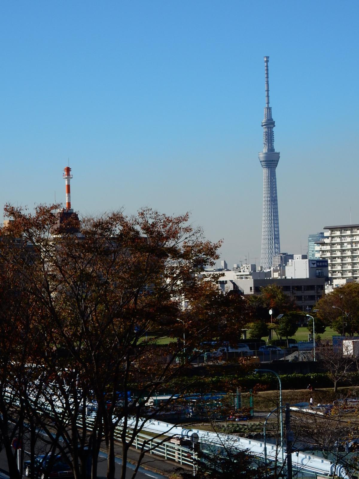 大島小松川公園から東京スカイツリーを望む