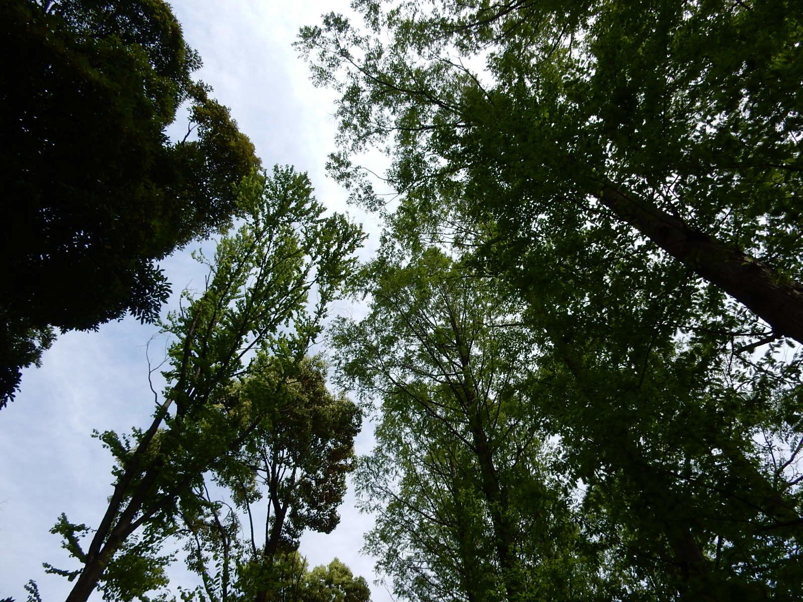 木立から見上げる