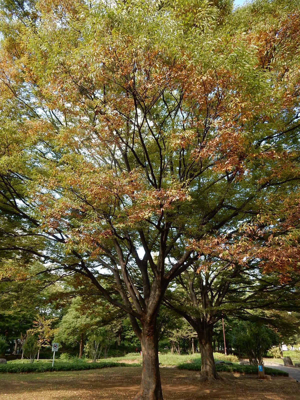 色付き始めた木