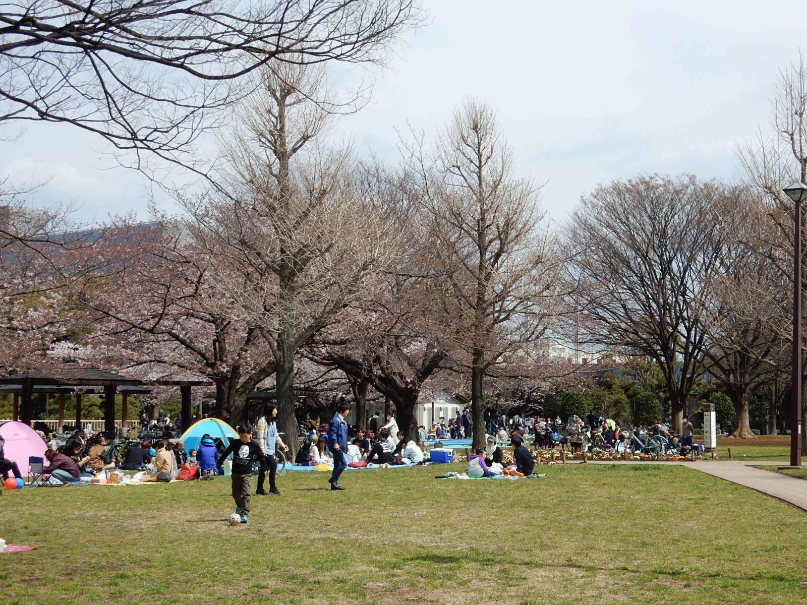 亀戸中央公園B地区で花見をする人々