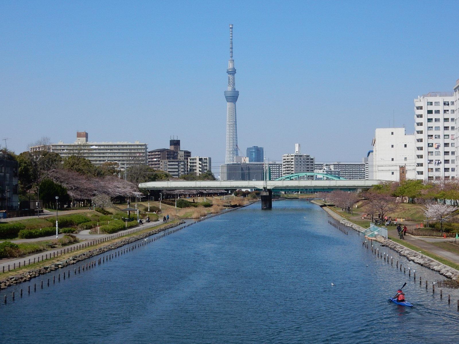 ふれあい橋からの東京スカイツリーと桜