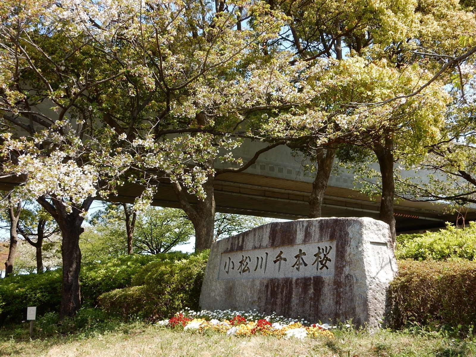 小松川千本桜の碑